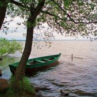 На озере Плещеевом :: елена