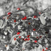 Лесные ягоды :: Владимир Лазарев