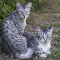 Мать и дочь :: Игорь Сикорский