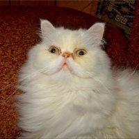 Котище - длинные усищи. :: Чария Зоя
