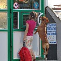 С собаками нельзя........... :: Андрей Lyz