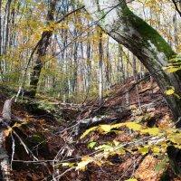 Осенью в лесу. :: Береславская Елена