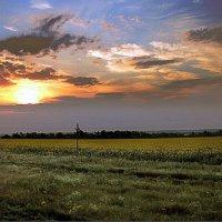 Небо...поле... :: Елена Павлова (Смолова)