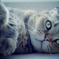 мой ленивый кот :: Юлия Ташкенова