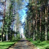 Аллея в парке Бернгарда. (Ленинградская область). :: Светлана Калмыкова