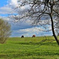 В поле :: Marina Pavlova