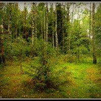 В лесу :: Михаил Цегалко