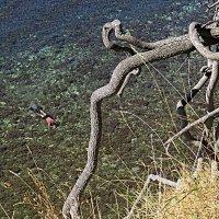 Прозрачная вода :: Валерий Дворников