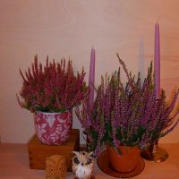 Вереск, совушки и свечи :: Nina Yudicheva