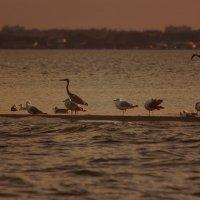 Птичий остров :: Евгеша Сафронова