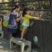 Таиланд. Бангкок. В зоопарке :: Владимир Шибинский