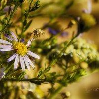 цветы предгорья :: Ксения