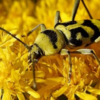 В жёлтых Астраханских ...джунглях ....!!! :: Серёжа Стрельников