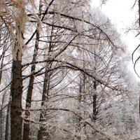 Зима приходит :: Надежда