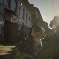 портрет Котейки в контровом свете, на закате дня, в городе Ростове Великом :: Алексадр Мякшин