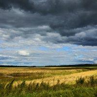Озерко в поле. :: юрий Амосов