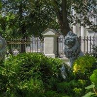 Львы Губернаторского сада :: Сергей Цветков