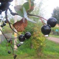 Вот и осень. :: Михаил Попов