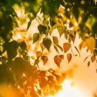 Осенние лучи :: Ирина Яздан Мехр