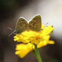 Бабочки - романтики :: Светлана Попова