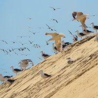 Птичий базарчик :: Александр Юдин