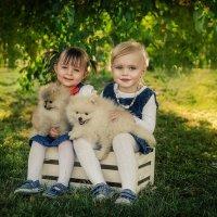 Фотосессия со щенками :: Яна Краснова