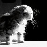 Хочется больше света! :: Laborant Григоров