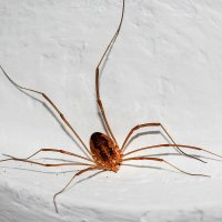 IMG_5592 паук :: Олег Петрушин