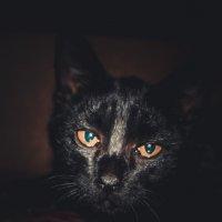 Котик! :: Ирина Антоновна