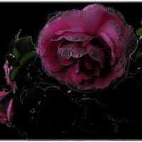 Розовые розы :: Нина Корешкова