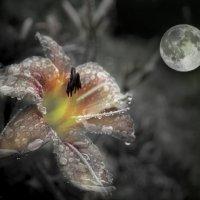 Душа Луны :: Екатерина Рябинина