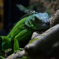 Изумрудный дракон :: Александр (Алчи) Шерстнёв