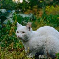 мудрый старый кот :: Света Кондрашова