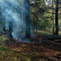 Возгорание в лесу. :: Валерий Молоток