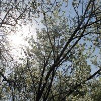 Весна :: Julia Tyagunova