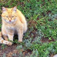 Осенний кот в зеленом интерьере... :: Александр Облещенко