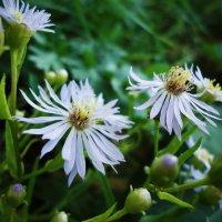Мир маленьких цветов :: Виктория Власова