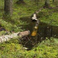 Сыро в лесу :: Aнна Зарубина