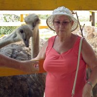 На страусиной ферме :: Вера Щукина