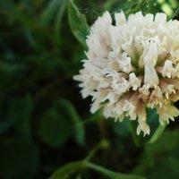 Просто цветок :: Виктория Власова