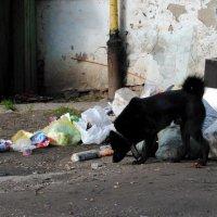 Кто подкармливает собак :: Андрей Фетисов