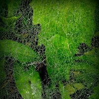Паучок сплел паутинку :: Lilek Pogorelova