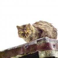 Тише,мыши! Кот на  крыше! :: A. SMIRNOV