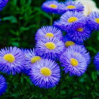 Цветы. :: Николай Сидаш
