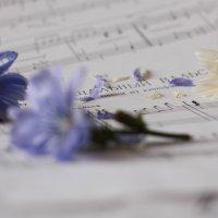 Прощальный вальс :: Anna Minevich