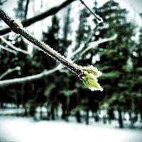 Весна на Рождество :: Сергей Коршунов