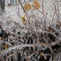 Ледяные веточки :: Наталья Тимошенко