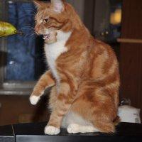 Мой кот Кокос и груша. :: Виталий Виницкий