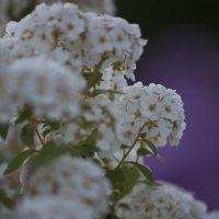 Цветы :: Александр Павленко
