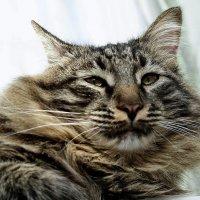 страшнее кошки зверя нет. :: Андрей ЕВСЕЕВ